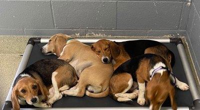 isle of wight animal control dogs